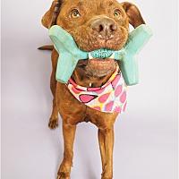 Adopt A Pet :: Dionne - Phoenix, AZ