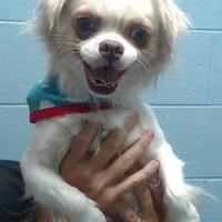 Adopt A Pet :: Myers - Spartanburg, SC