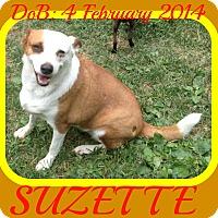 Adopt A Pet :: SUZETTE - Manchester, NH