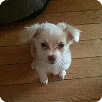 Adopt A Pet :: Eeyore - Pleasant Hill, CA