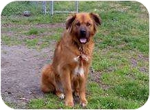 Shepherd (Unknown Type) Mix Dog for adoption in Quentin, Pennsylvania - Savannah - Great Family Dog!