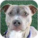 Terrier (Unknown Type, Medium) Mix Dog for adoption in Eatontown, New Jersey - Leo