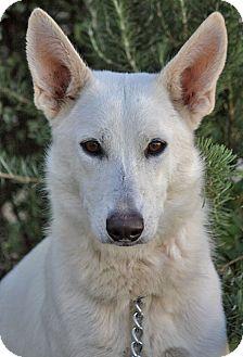 German Shepherd Dog Mix Dog for adoption in Los Angeles, California - Chantilly von Celle