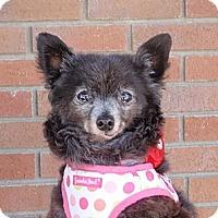 Adopt A Pet :: Chole - Corona, CA