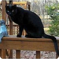 Adopt A Pet :: Twinkle - Alexandria, VA