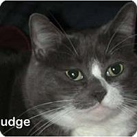 Adopt A Pet :: Smudge - Portland, OR