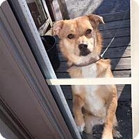 Adopt A Pet :: BEAR (Adoption Pending) - Upper Sandusky, OH