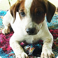 Adopt A Pet :: Jamie - Hagerstown, MD