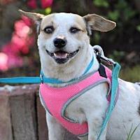 Adopt A Pet :: Vena/MS - Columbia, TN