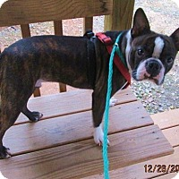 Adopt A Pet :: HOOTIE - Lincolndale, NY