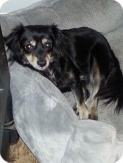 Terrier (Unknown Type, Medium) Mix Dog for adoption in Dothan, Alabama - Freckles