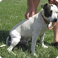 Adopt A Pet :: Speck - Mount Sterling, KY