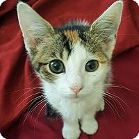 Adopt A Pet :: MC Escher - Homewood, AL