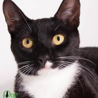 Adopt A Pet :: Willow - Savannah, GA