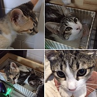 Adopt A Pet :: Mitzy and Millie - Novato, CA