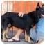 Photo 1 - German Shepherd Dog Mix Dog for adoption in Los Angeles, California - Wilton von Werdenberg