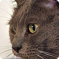 Adopt A Pet :: Tink - Huntington, NY