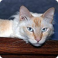 Adopt A Pet :: Presley - New Port Richey, FL