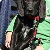 Adopt A Pet :: Paris - Cumming, GA