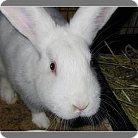 Adopt A Pet :: Gentry - Williston, FL