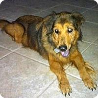 Adopt A Pet :: Bridget - Jacksonville, FL