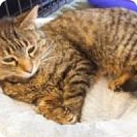 Adopt A Pet :: Kelly - Bear, DE