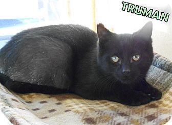 Domestic Shorthair Kitten for adoption in Gaylord, Michigan - Truman