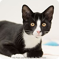 Adopt A Pet :: Tux - Fountain Hills, AZ