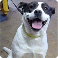 Adopt A Pet :: Ice - Staunton, VA