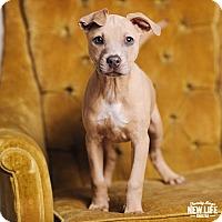 Adopt A Pet :: Tilda - Portland, OR