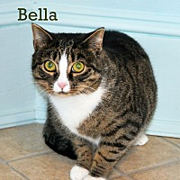 Adopt A Pet :: Bella - West Hartford, CT