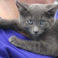 Adopt A Pet :: Smokey Robinson - Studio City, CA