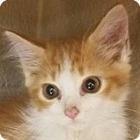 Adopt A Pet :: Simon - Gadsden, AL