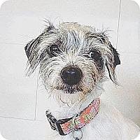 Adopt A Pet :: Nalah *COURTESY LISTING - Los Angeles, CA