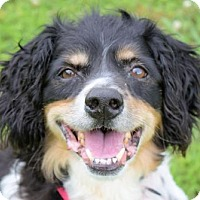 Adopt A Pet :: 1706-0334 Roscoe - Virginia Beach, VA