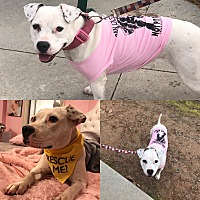 Adopt A Pet :: LILLY - Marietta, GA
