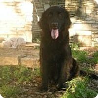Adopt A Pet :: Hanna - Driftwood, TX