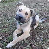 Adopt A Pet :: Joy - Mocksville, NC