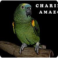 Adopt A Pet :: Charlie - Punta Gorda, FL