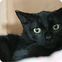 Adopt A Pet :: Blackie - Canoga Park, CA