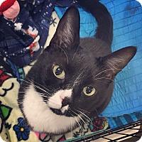 Adopt A Pet :: Spunky - Raleigh, NC