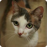 Adopt A Pet :: Marble - Canoga Park, CA