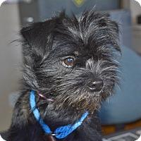 Adopt A Pet :: Clover - Meridian, ID