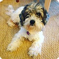 Adopt A Pet :: Dorothy - Arlington, TN