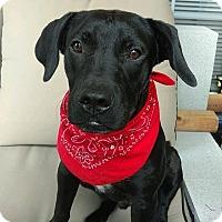 Adopt A Pet :: Jax - Fredericksburg, VA