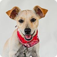 Adopt A Pet :: Perla - Calgary, AB
