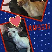 Adopt A Pet :: Ruben - Scottsdale, AZ