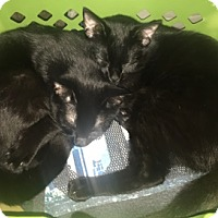 Adopt A Pet :: Hyde & Kelso - North Highlands, CA