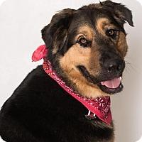 Adopt A Pet :: Yogi - Canoga Park, CA