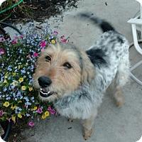 Adopt A Pet :: Arnie - APPLICATIONS CLOSED - Livonia, MI